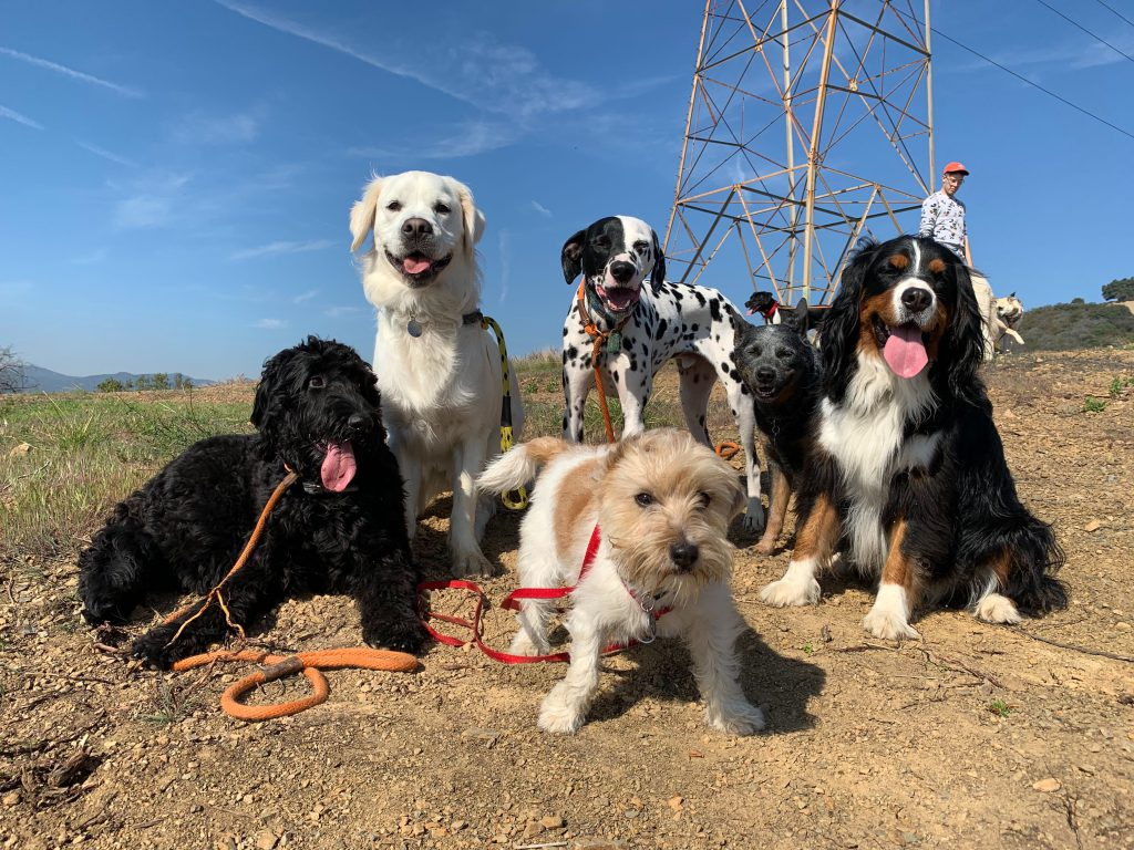 Best dog-friendly hikes in LA | Fitdog Los Angeles Daycare, Sports, Training, Adventure Classes