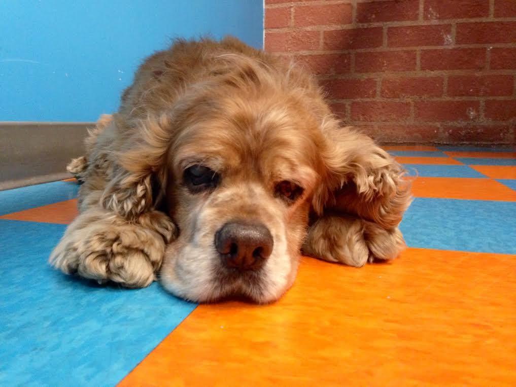 Fitdog sports club fitdog of the month santa monica for Dog daycare santa monica