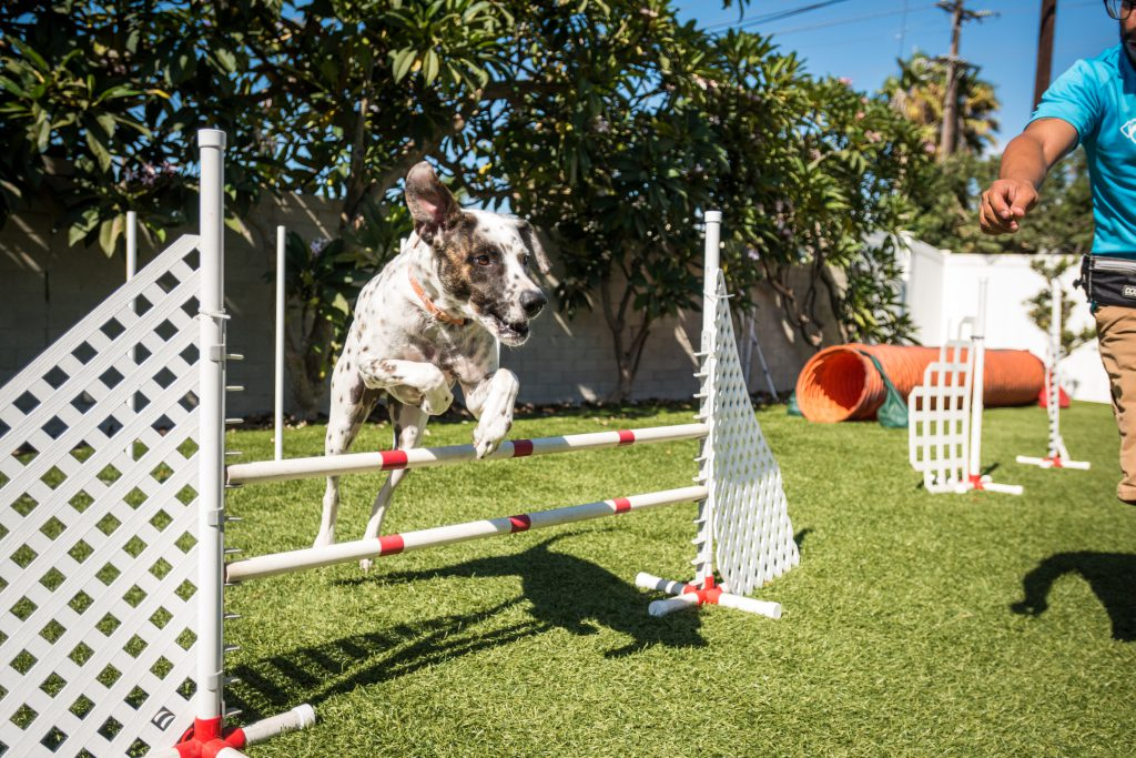 activities for hyperactive dogs