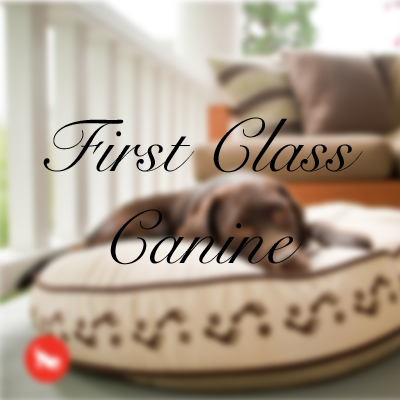 First Class Canine Beds