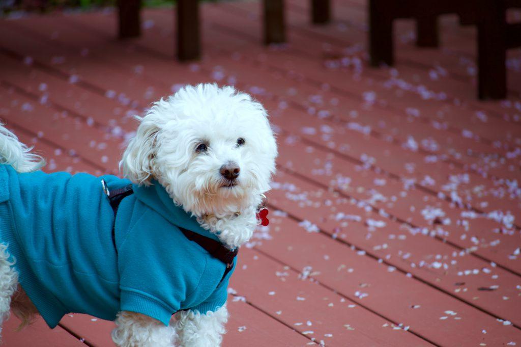 dogs need jackets