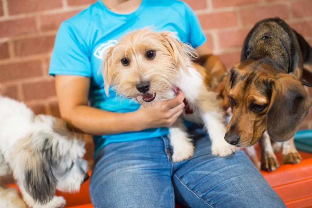 do alpha dogs like daycare
