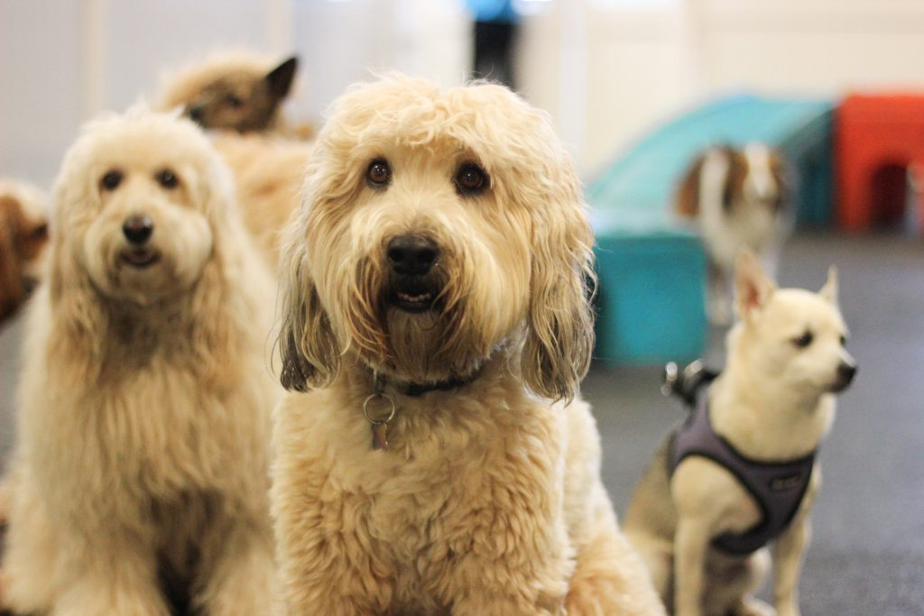 Choose the Perfect Dog Daycare | Fitdog Los Angeles | Dog Daycare, Hiking + Sports Classes