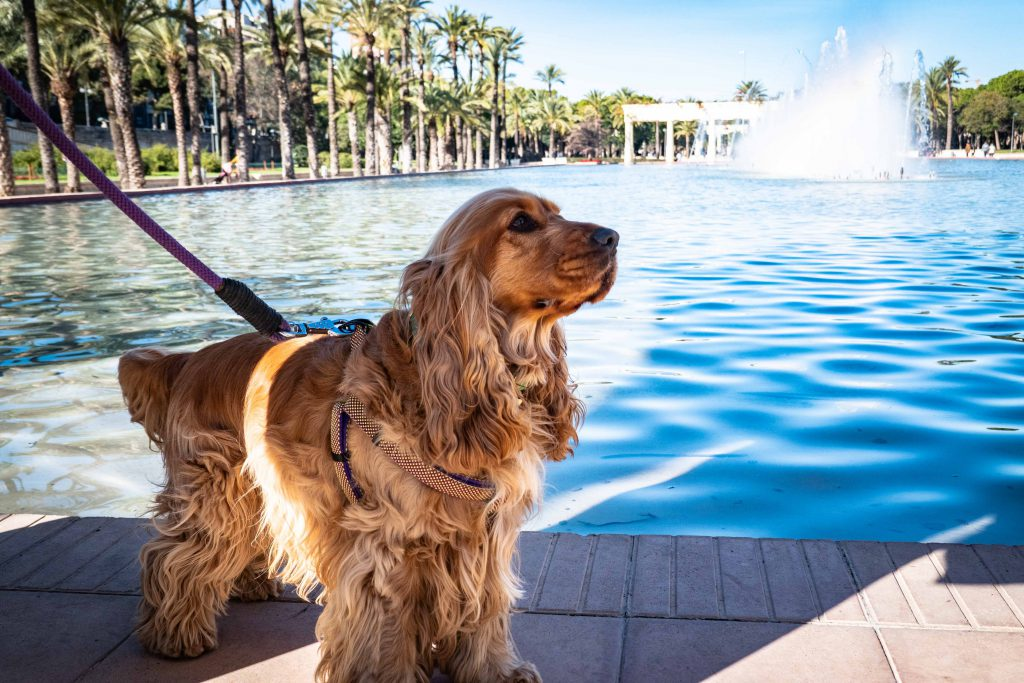 vacation with your dog