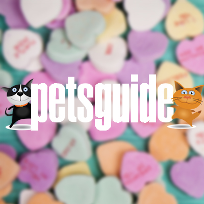 PetsGuide Smooches