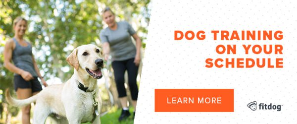 Fitdog Los Angeles Dog Training Daycare Hiking + Sports