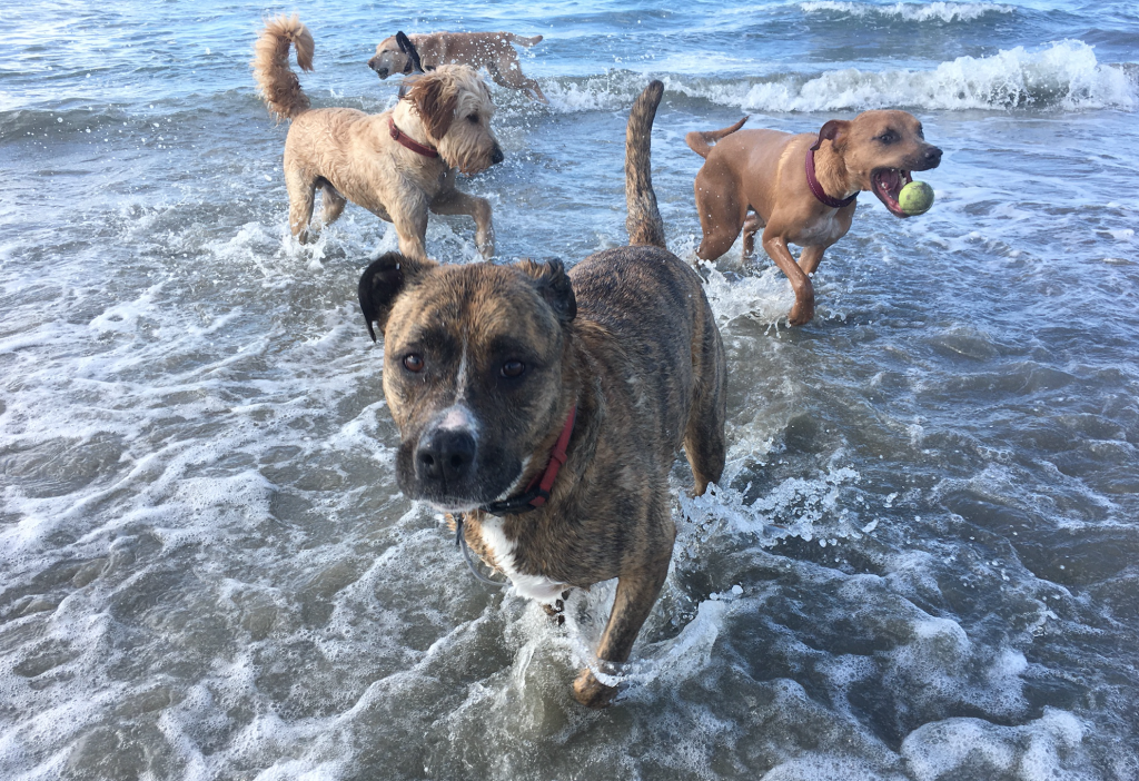 dog beach day
