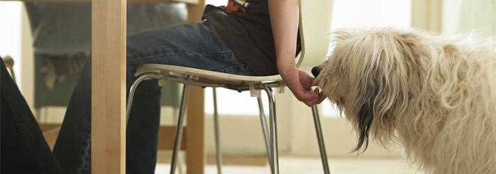 Fitdog Sports Club _ Dog Blog _ Risky Business For Pet Parents