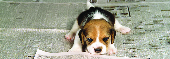 Fitdog Sports Club_Dog Blog_How Not To Get Discouraged From Potty Training