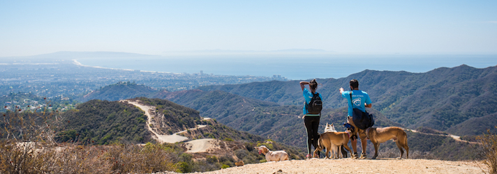 Fitdog Sports Club_Dog Blog_Hikes For Dogs