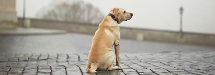 Fitdog Sports Club_Dog Blog_Lost Dogs