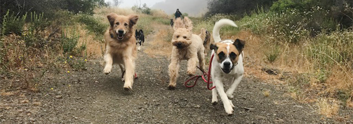 Fitdog Sports Club _ Dog Blog _ On & Off The Trail - Safety First _ Dog Hikes