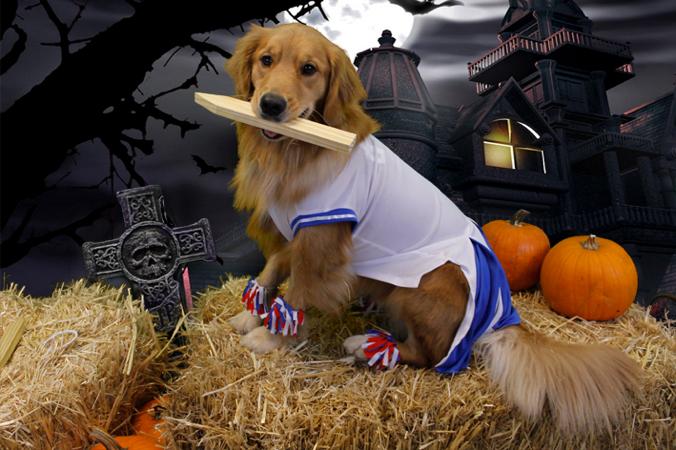 Fitdog Sports Club _ Dog Blog _ 7th Annual Fitdog Howl-o-ween