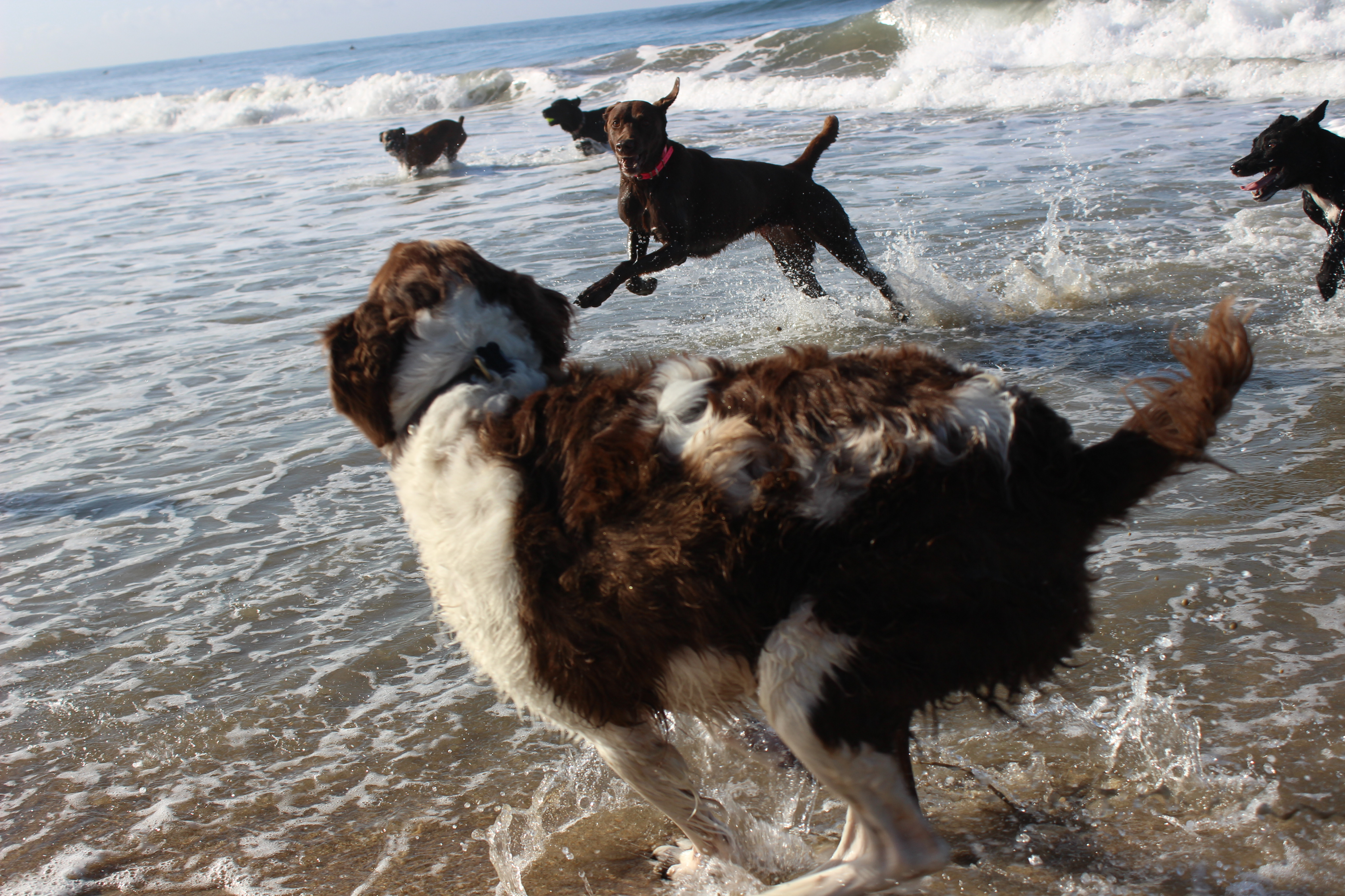 Making friends at the dog beach!