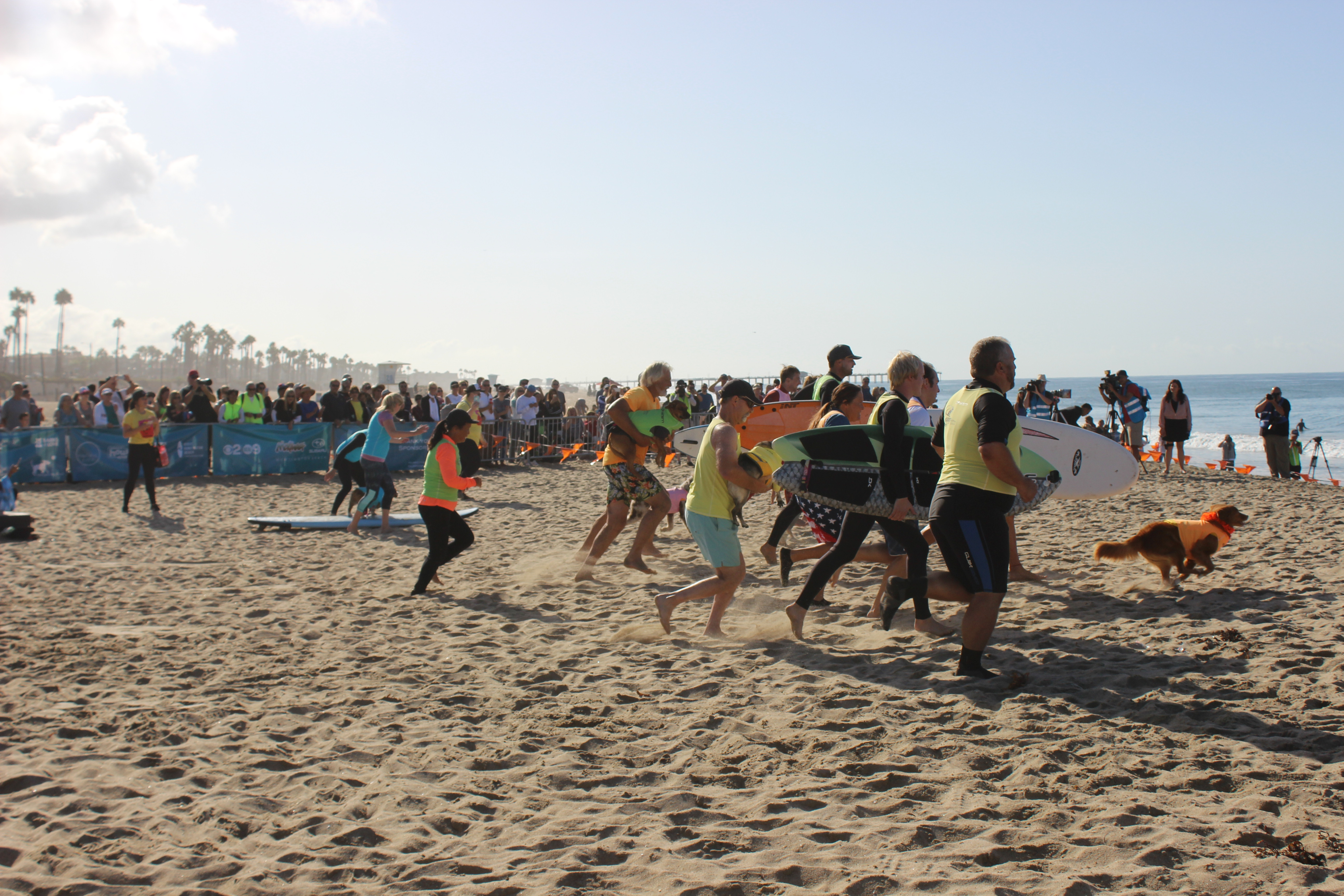 Competitors run towards the water at the sound of the opening bell.