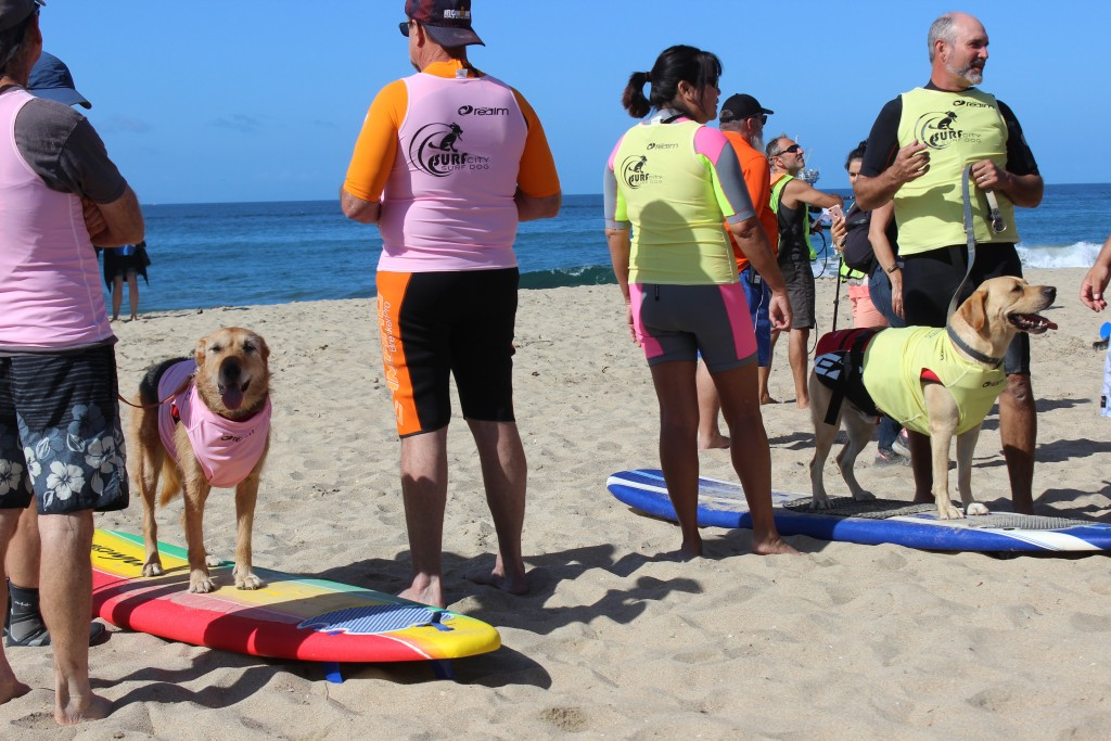 Competitors stand by on their boards before the competition starts.