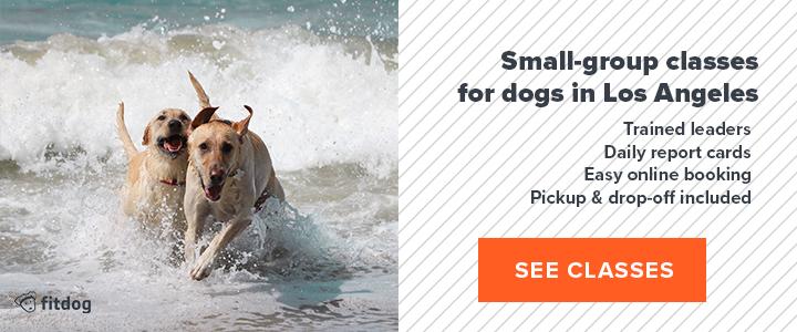 Fitdog Los Angeles | Dog Daycare + Sports