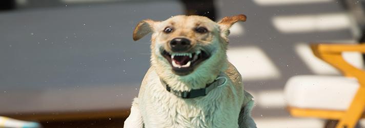Fitdog Sports Club _ Dog Blog _ Fresh and Clean