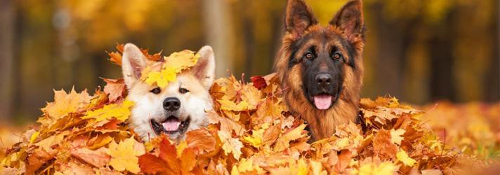 Fitdog Sports Club _ Dog Blog _ So Many Reasons To Love The Fall!