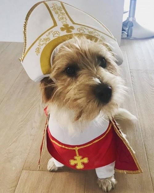 Bruno the Pope