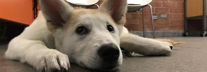 Dog Won T Let Strangers Pet Him