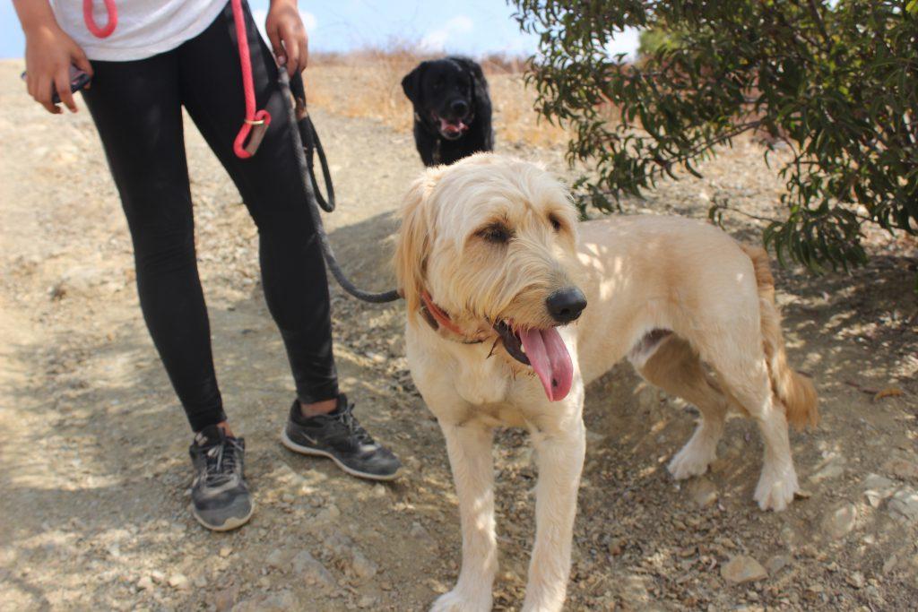 dog's first hike