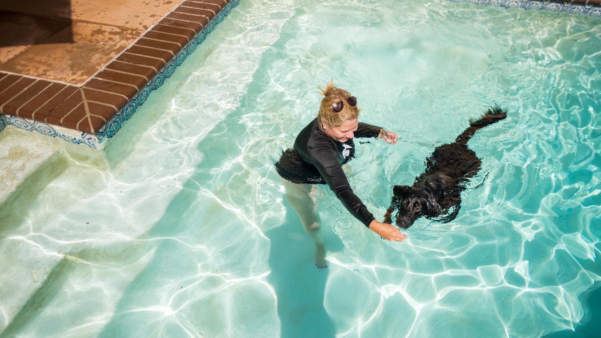 Retriever learning to swim