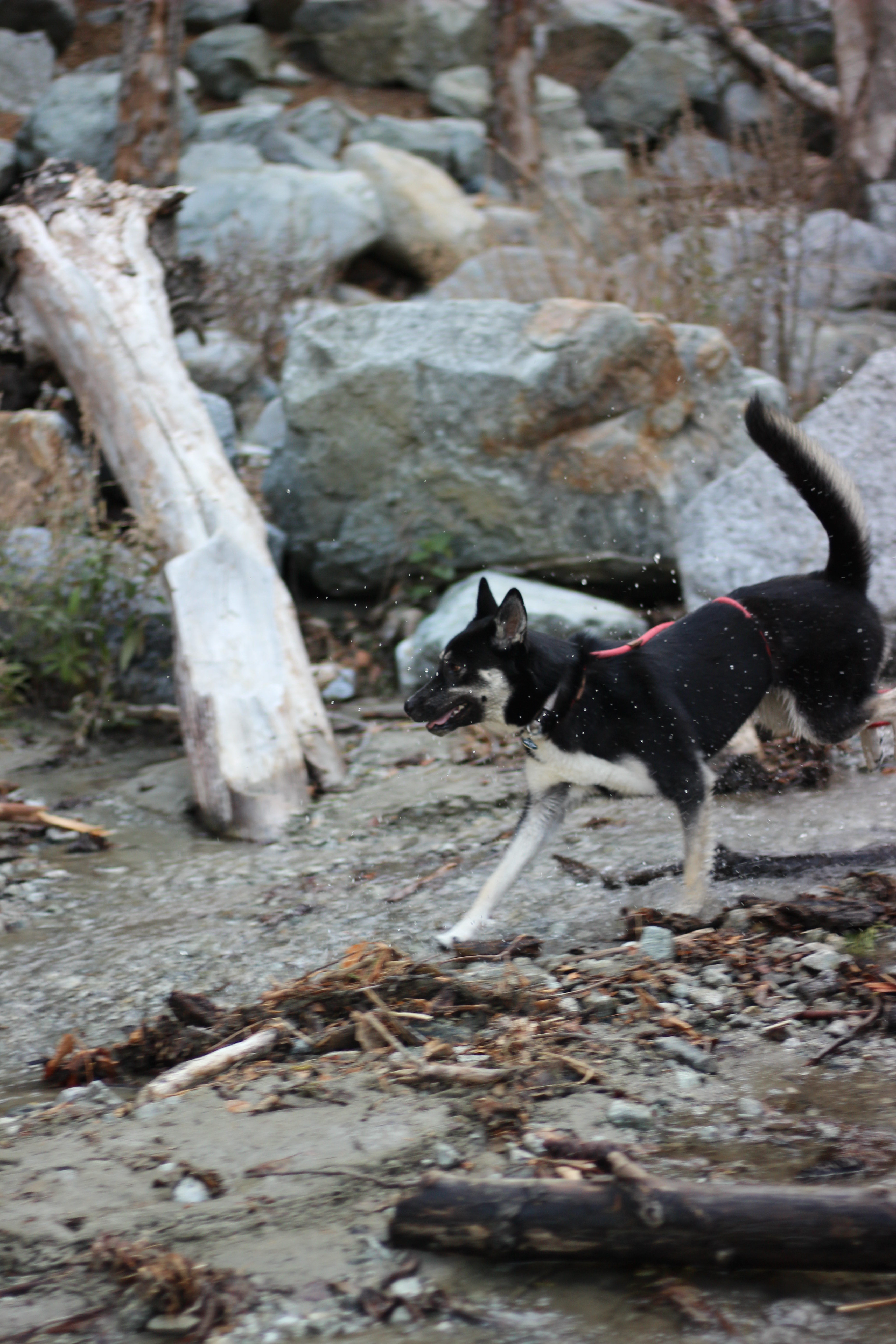 Penny playing in the stream