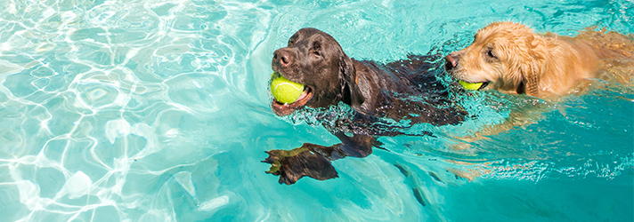Water Dogs