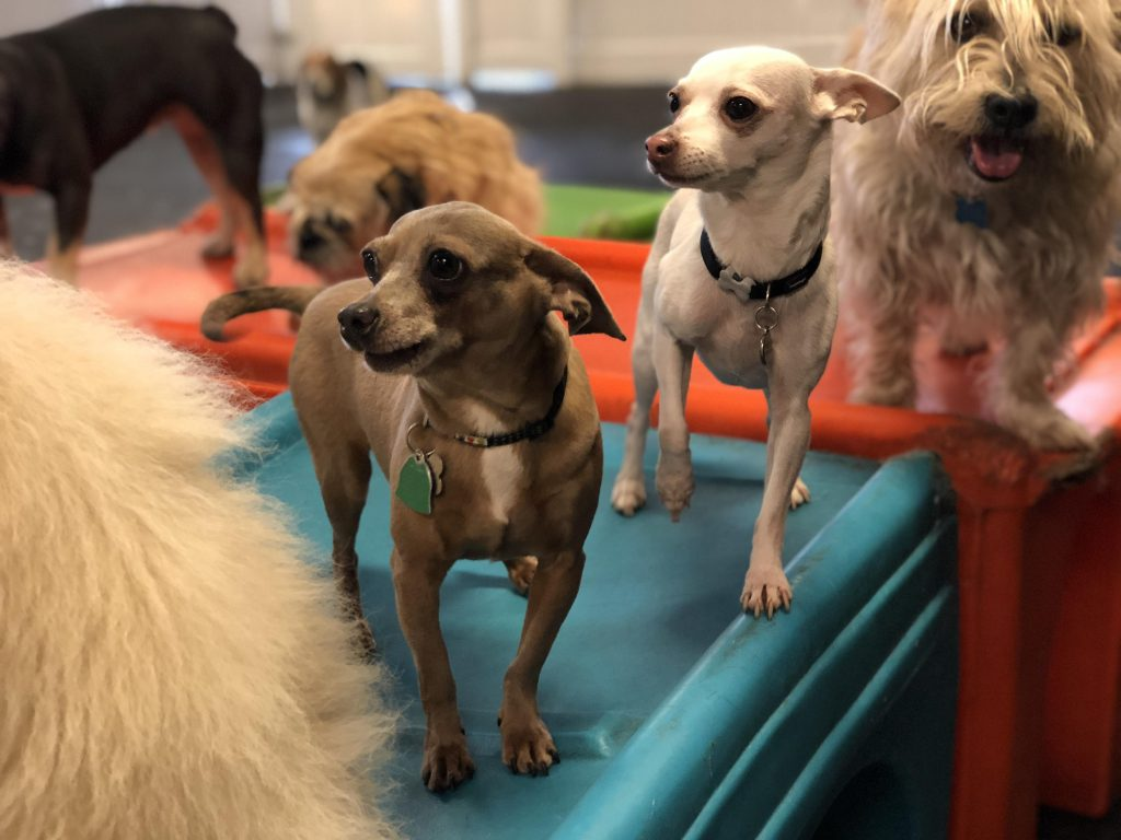 myths about dog daycare