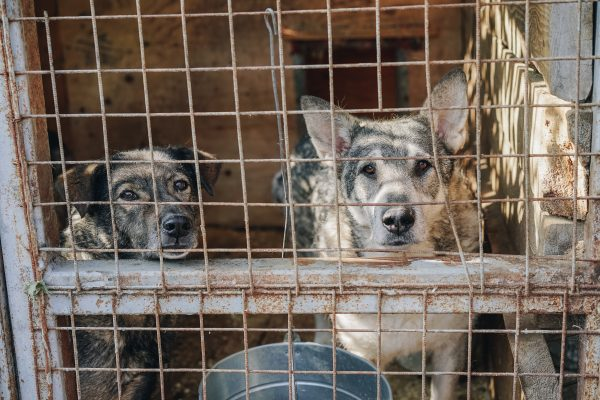Why Spay & Neuter is So Important   Fitdog Daycare, Hiking, Sports, and Training   Los Angeles