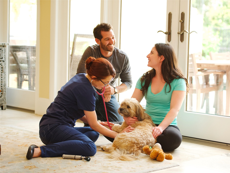 at-home vet care
