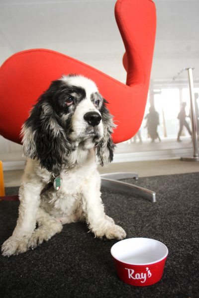 LACMA's Barky Brunch reviwed by our food critic, Ginger