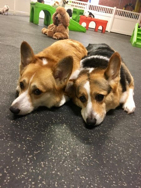 fitdog of the month