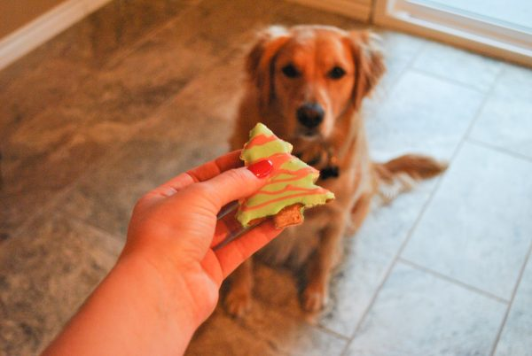 diy doggie christmas cookies