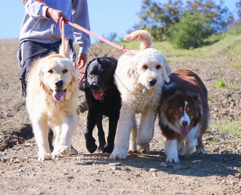 dog walkers los angeles
