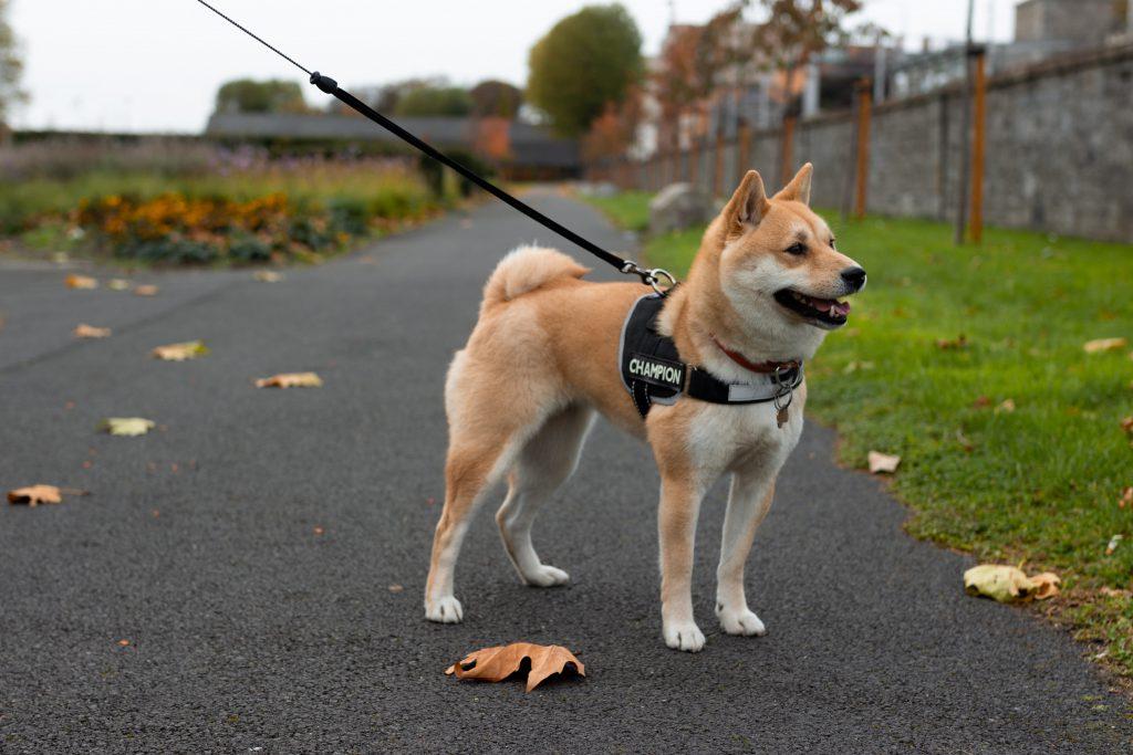 30-minute dog walk