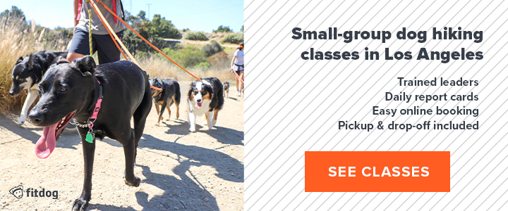 Fitdog Los Angeles dog hiking daycare sports and training
