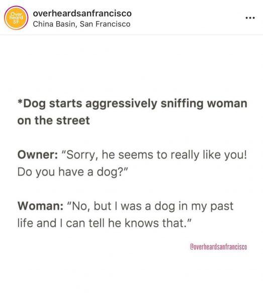 overheard dogs