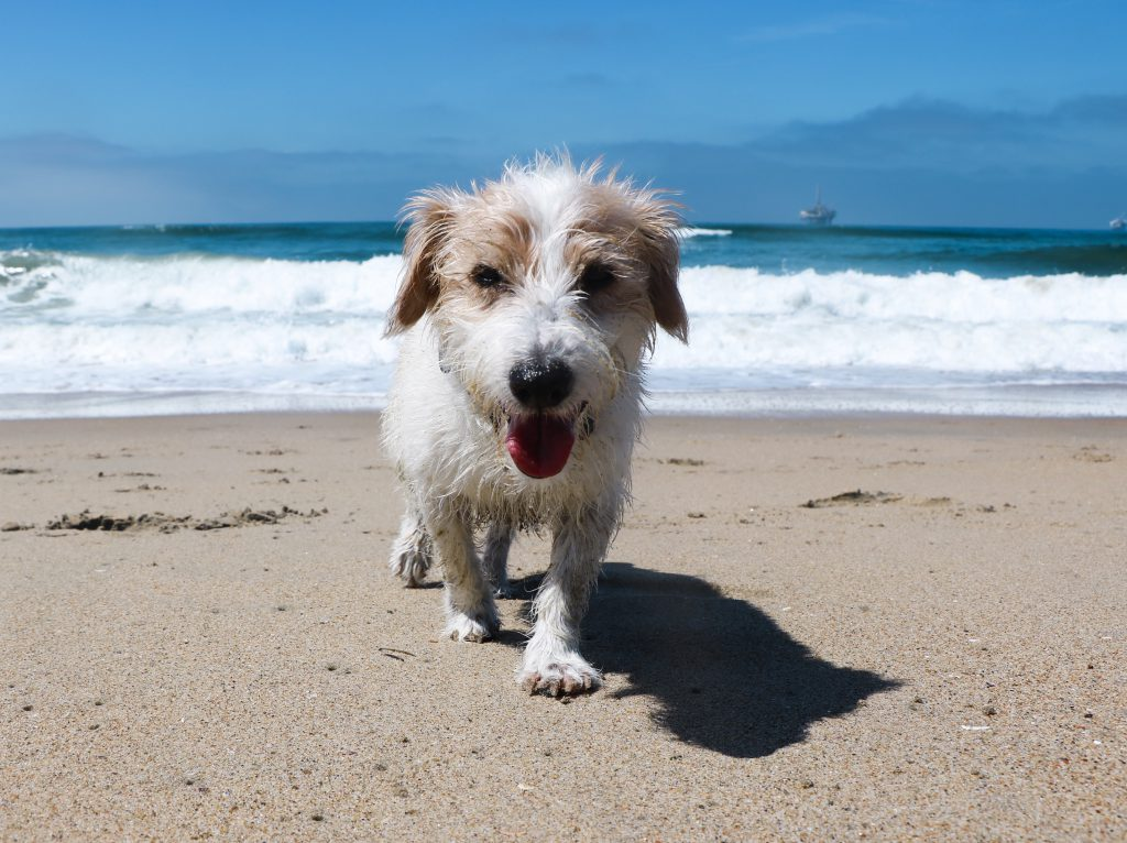 Meet Andrea, Fitdog's Co-Founder | Fitdog Sports Los Angeles Hiking Daycare Boarding Grooming and Training