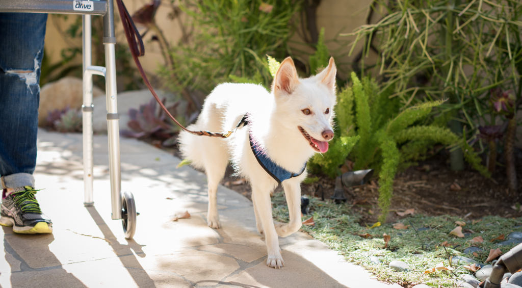 Why You Should Never Fake Having a Service Dog   Fitdog Los Angeles Dog Hiking, Training, Daycare and Sports