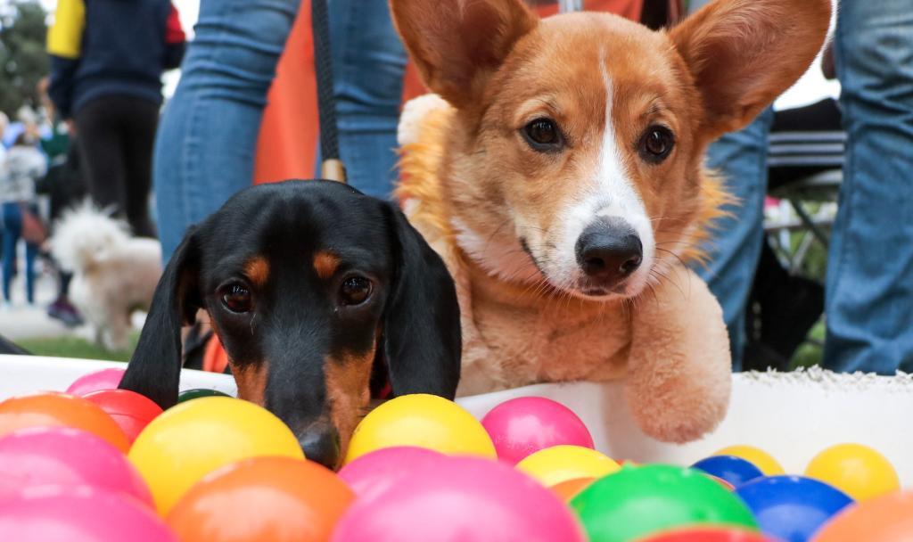 dog-friendly halloween | Fitdog Los Angeles Daycare, Boarding, Hiking, Training