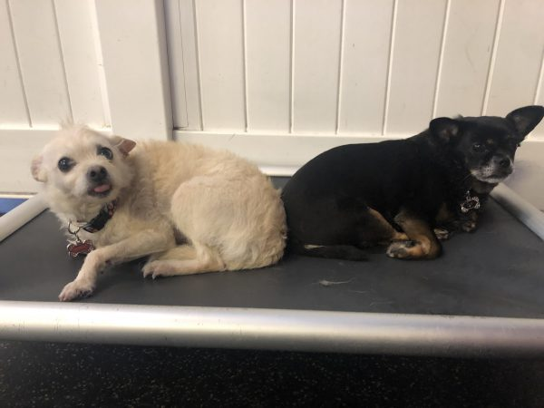 Sadie and Ivy   Fitdog of the Month