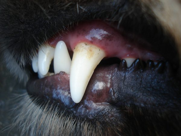 Dog's Dental Health | Fitdog Los Angeles