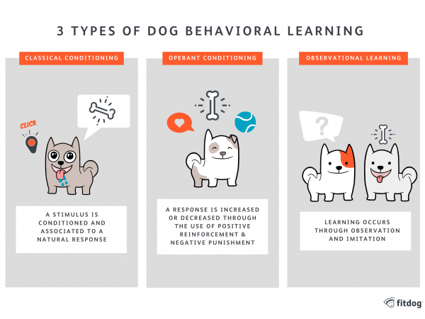 Train & Play 3 Types of Learning | Fitdog Los Angeles Daycare, Sports, Training, Adventures