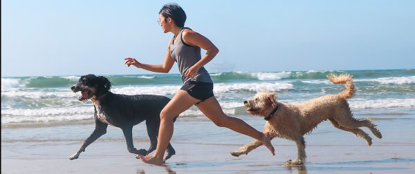Dogs playing at the beach | Fitdog Blog