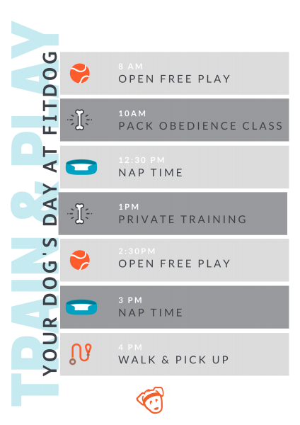 Train & Play Schedule | Fitdog Los Angeles Daycare Training Sports Adventure