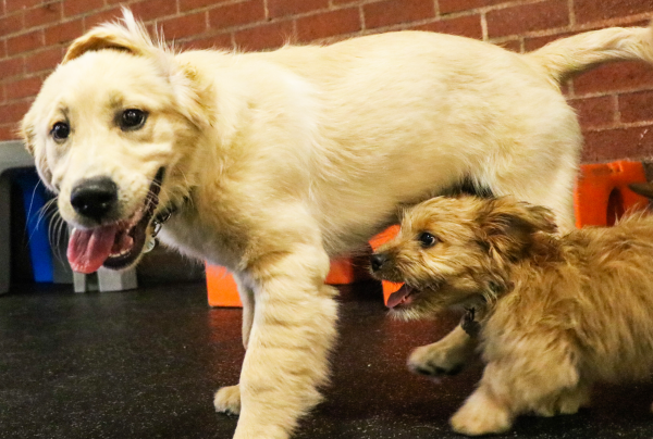 Puppy Preschool | Fitdog Los Angeles Daycare, Training, Sports and Adventure classes