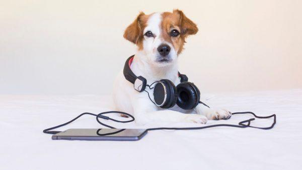 Dog FIrework Sounds | Fitdog Blog