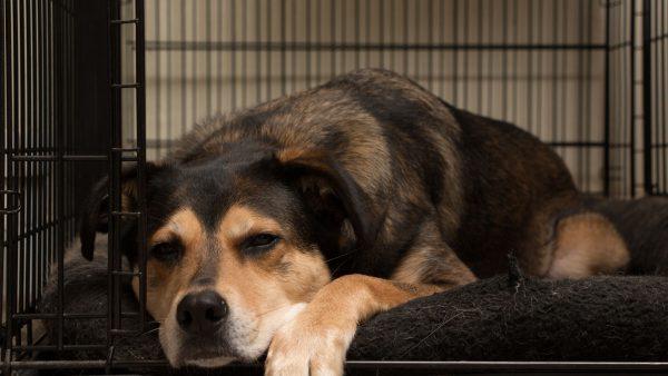 Dog in crate | fitdog Blog